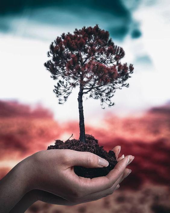 Simbolika drevesa v sanjah